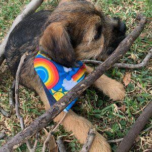 Dog bandanas, double sided, handmade by my label
